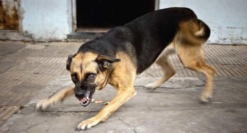 perro violento en las calles de Atlanta